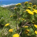cpt-camps-bay-2